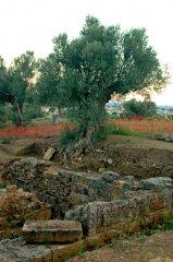 Nemea_Tirynt_Nauplion_Sparta52.JPG