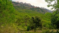 Montserrat08.JPG