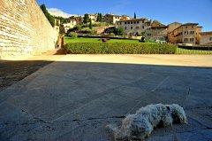 Assisi099.JPG