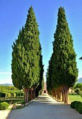 Assisi135.JPG