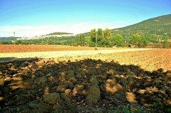 Assisi164.JPG