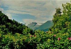 8Hardangerfjord6.jpg