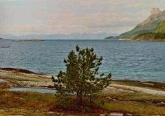 15Tysfjord2.jpg